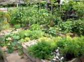 Herb Garden Design