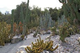 Ideas Cactus Garden