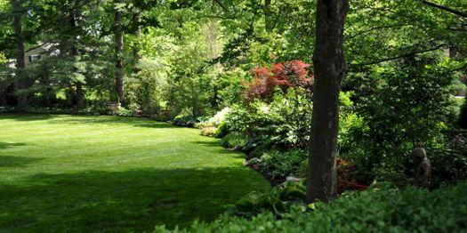 Landscaping Woodland Edge