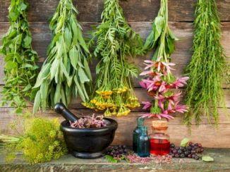 Medicinal Herb Garden Plants