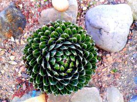 Outdoor Flowering Cactus Plants Garden