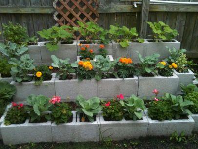 Raised Garden Bed Concrete Cinder Blocks