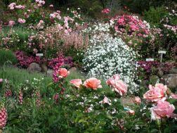 Rose Garden Design Idea