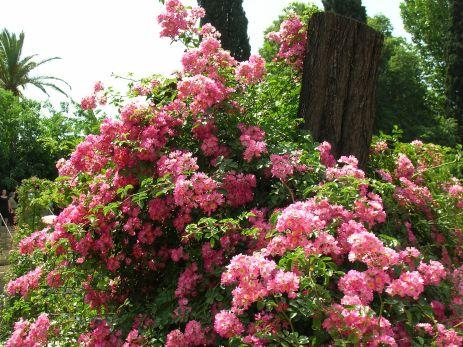 Rose Garden Landscaping Ideas