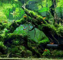 Aquarium Backyard Garden Ideas 11