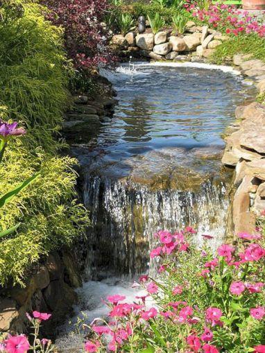 Aquarium Backyard Garden Ideas 3