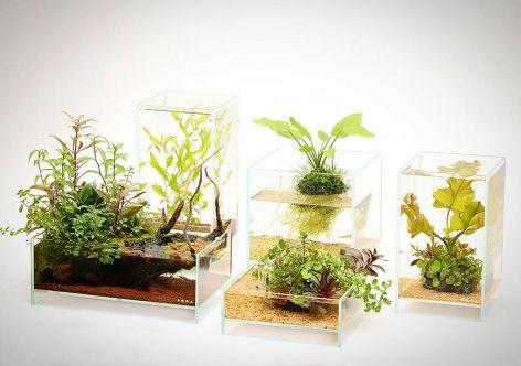 Aquarium Backyard Garden Ideas 7