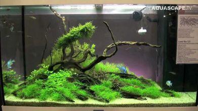 Aquarium Fish Outside Pond 2