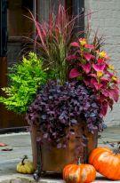 Fall Container Garden Plants Ideas