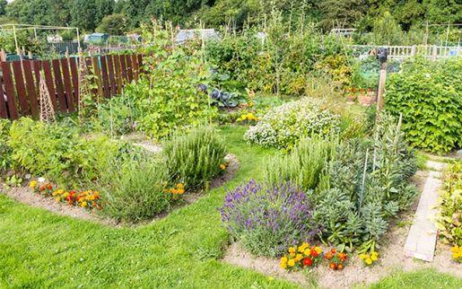 Flower and Vegetable Garden Design