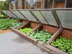 Greenhouse Raised Herb Gardens 6