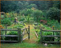 Large backyard vegetable garden