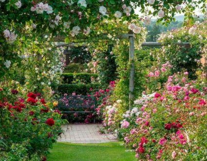 Eden Rose Ideas at Home