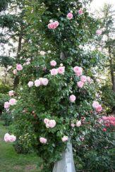 Eden Rose Ideas