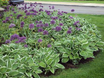 Perennial Flower Garden Design Idea