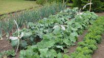 Beautiful Fall Garden Ideas For Awesome Fall Season 100