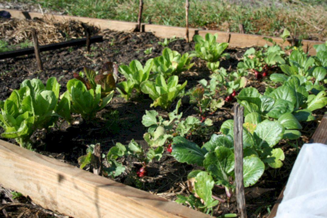 Beautiful Fall Garden Ideas For Awesome Fall Season 190