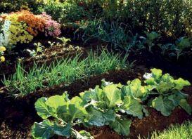 Beautiful Fall Garden Ideas For Awesome Fall Season 270