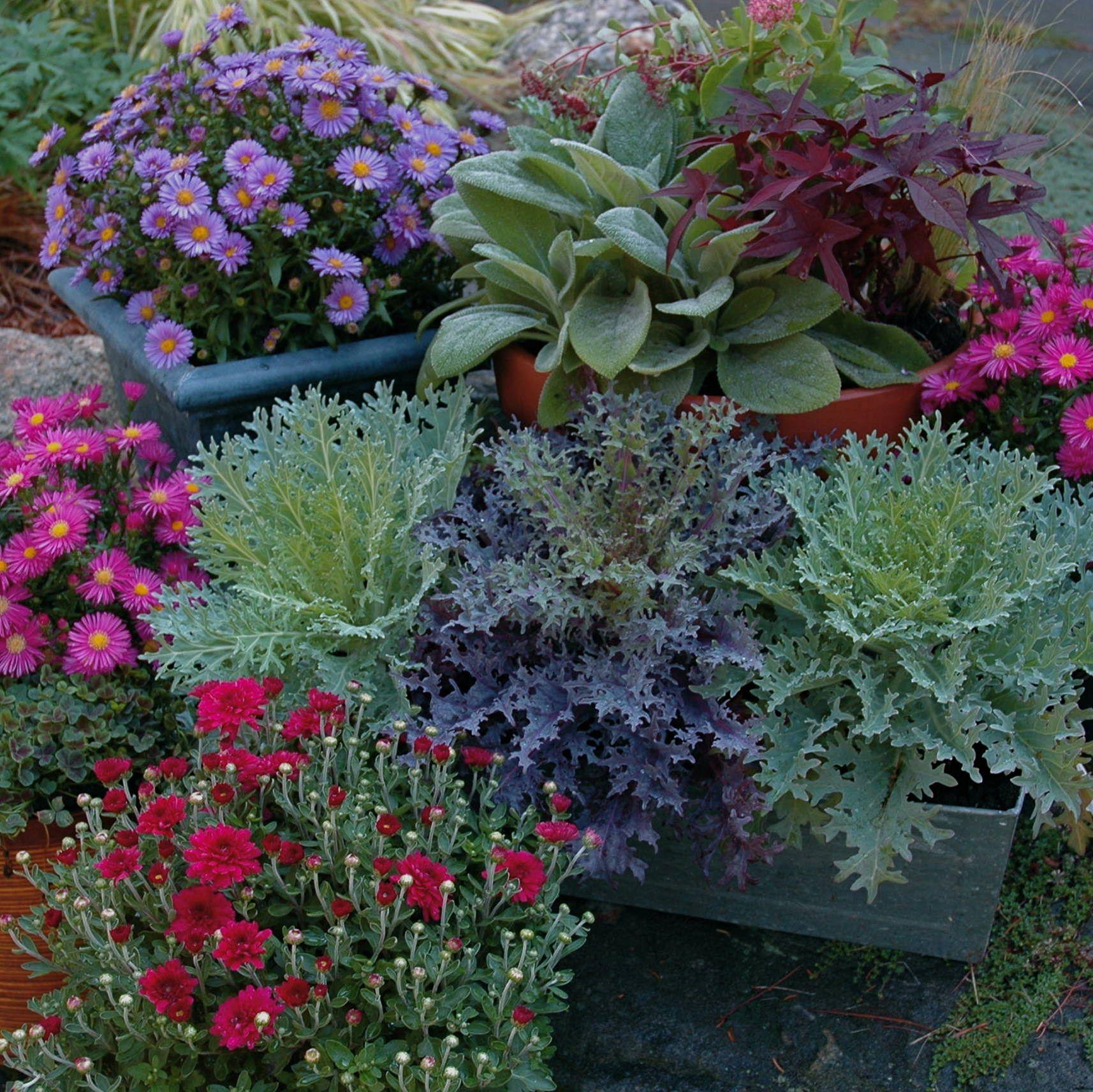 DIY Container Garden Decoration