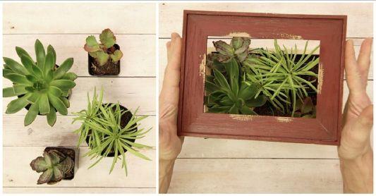DIY Succulent Wall Art Ideas