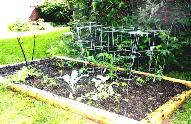 Small Vegetable Garden Idea