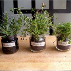 Best Indoor Herb Garden