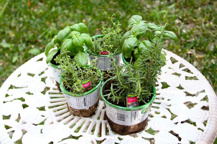 DIY Indoor Herb Garden Design Ideas