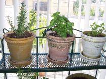 How to Grow Indoor Herb Garden