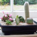 Indoor Cactus Gardens
