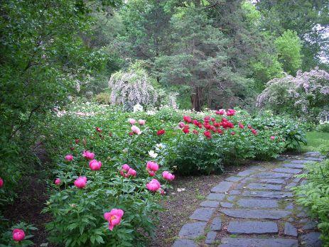 Peonies Garden Design