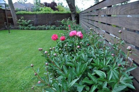 Peony Garden Designa