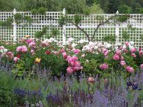 Peony Garden Idea