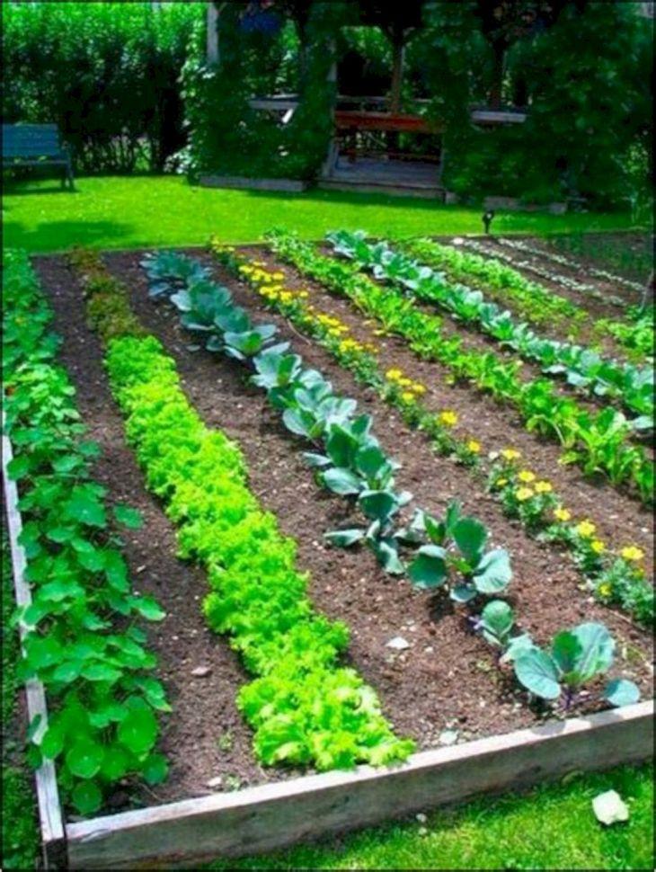vegetable garden design idea