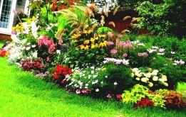 Small Front Yard Flower Garden Ideas