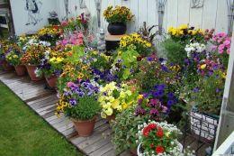 Vegetable Container Garden Ideas