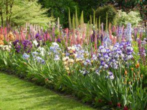 Beautiful Iris Garden Ideas 1