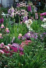 Beautiful Iris Garden Ideas 3