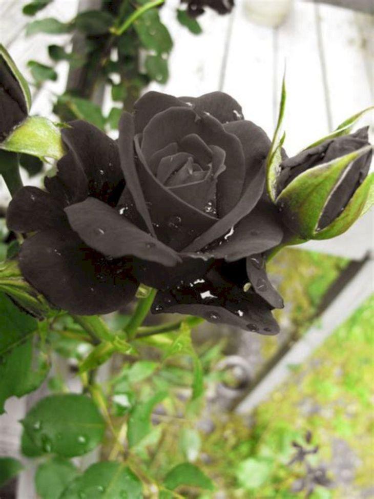 Black Flower Garden Ideas 3