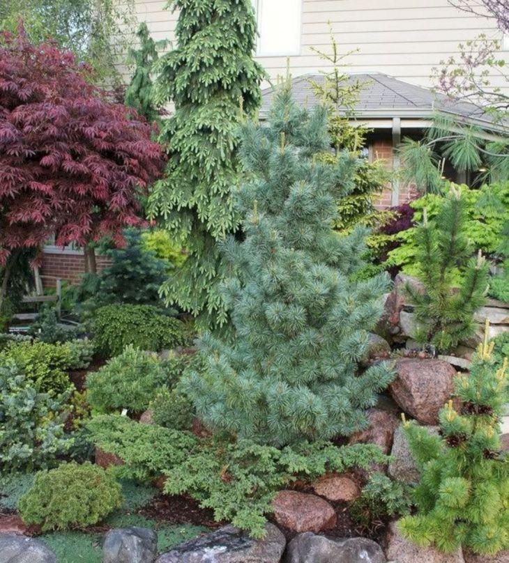 Front Yard Garden Ideas