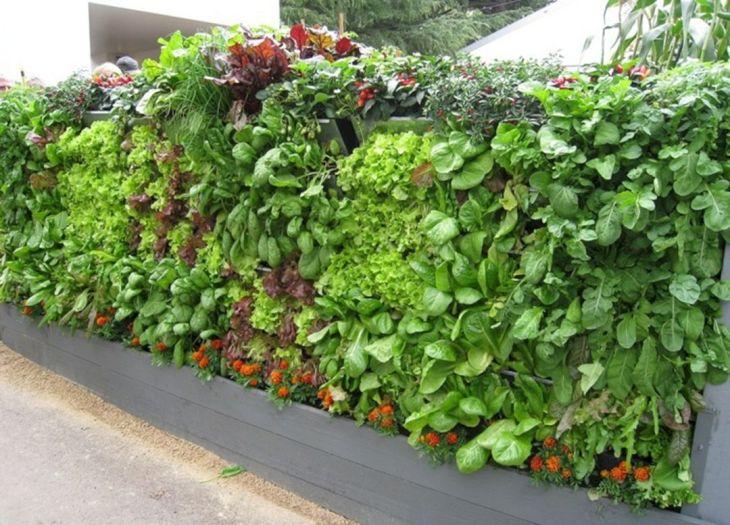 Vegetable Garden Ideas 3
