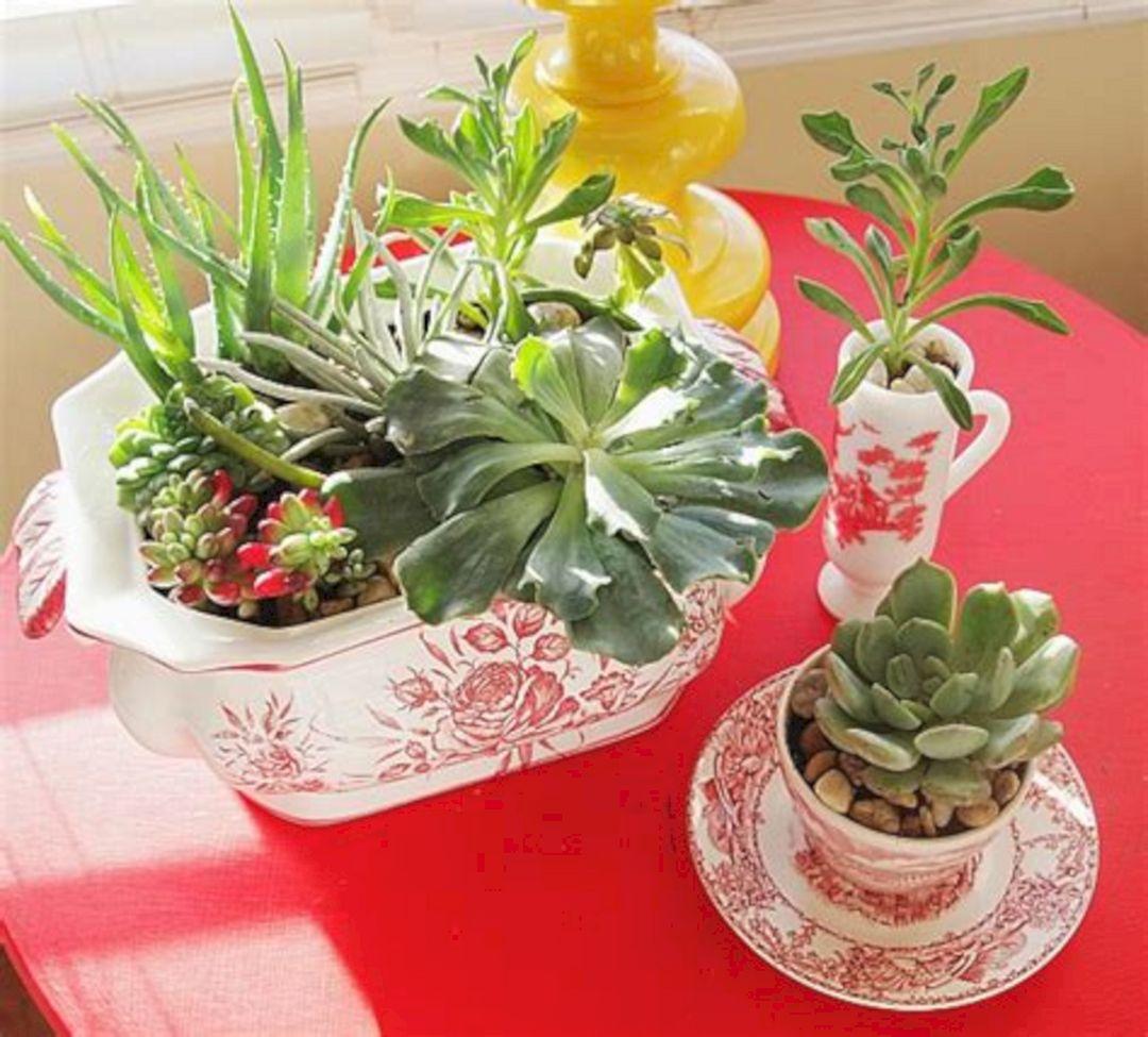 DIY indoor succulent garden