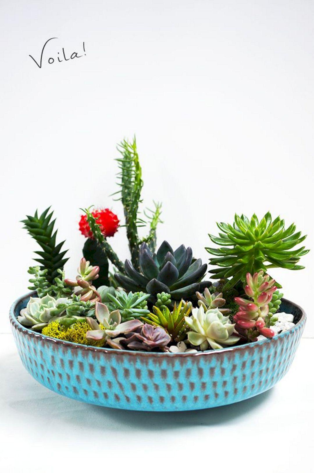 Indoor garden design ideas