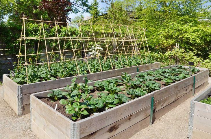 Vegetable Zen Garden Ideas 10