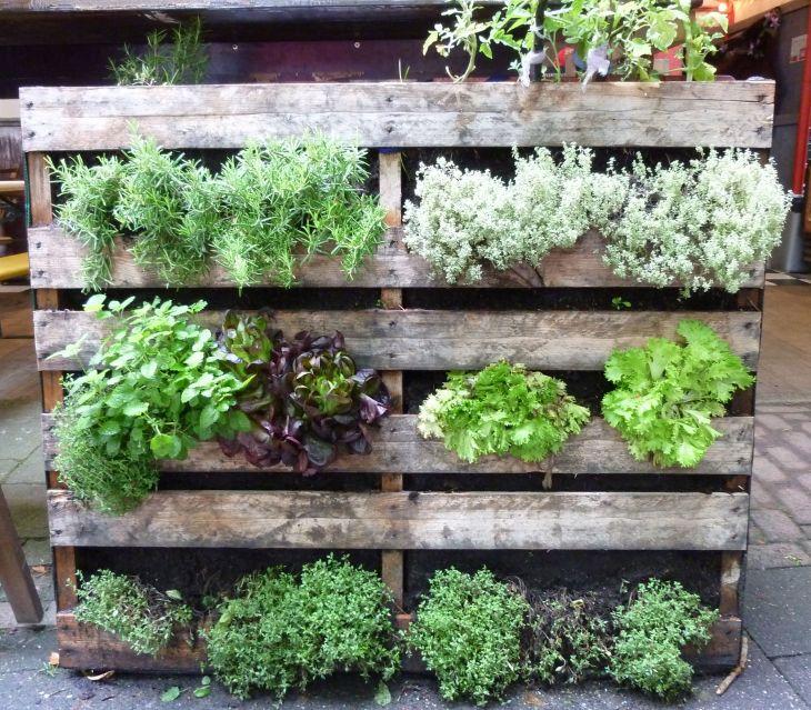 Vegetable Zen Garden Ideas 12