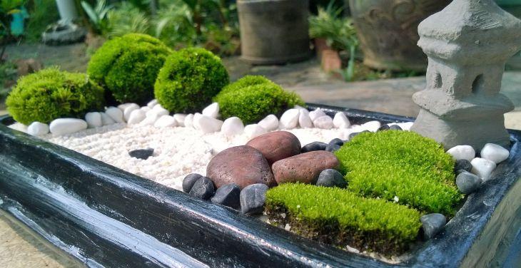 Vegetable Zen Garden Ideas 16
