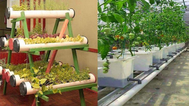 Vegetable Zen Garden Ideas 8