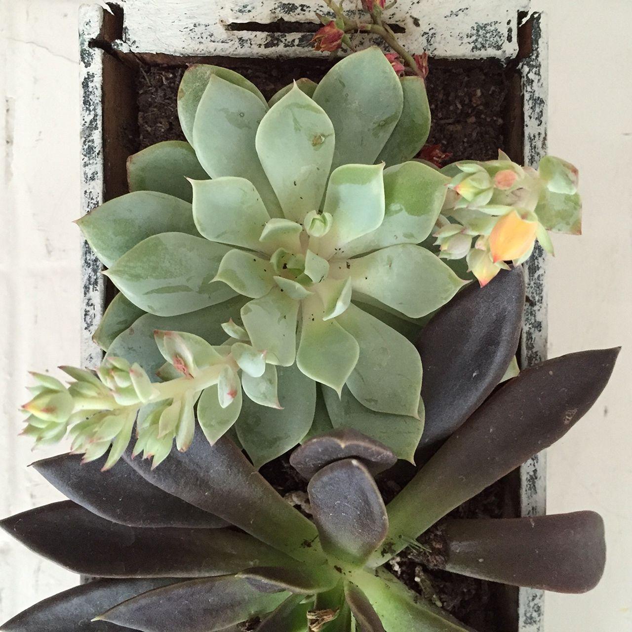 Wall indoor succulent garden