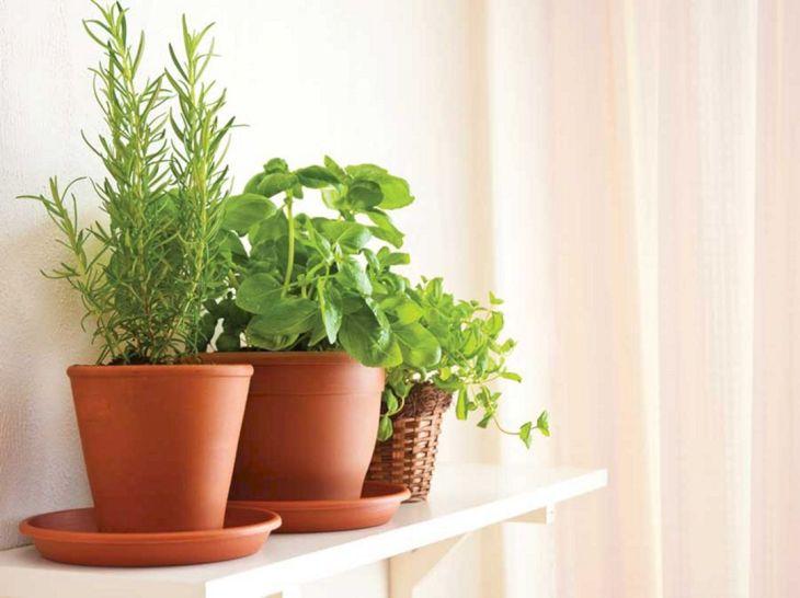 Indoor Herb Garden 160