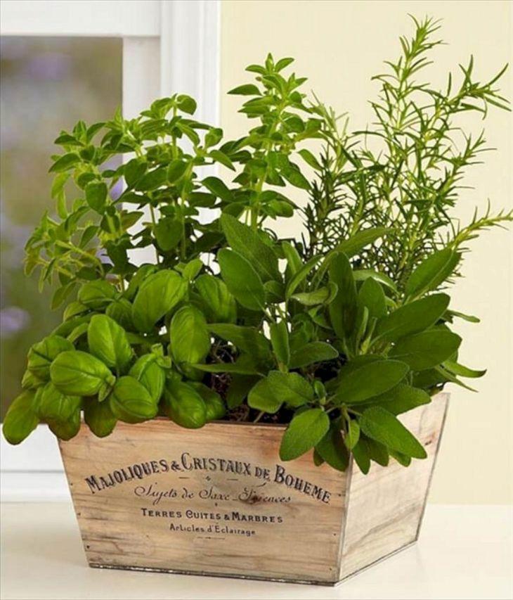 Indoor Herb Garden 210