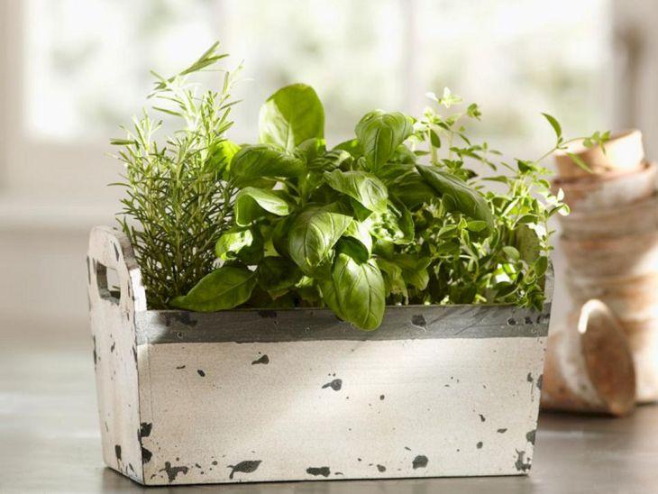 Indoor Herb Garden 240